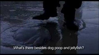 Jellyfish (2013)
