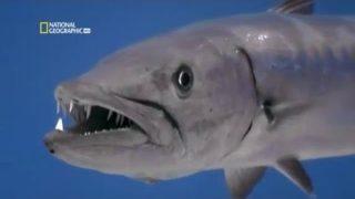 Najopasnije Životinje Okeana – Dokumentarni Film Sa Prevodom